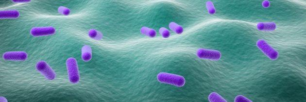 Astuces pour améliorer sa flore intestinale avec ou sans probiotiques