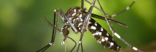 Zika : un expert recommande de déplacer les JO de Rio