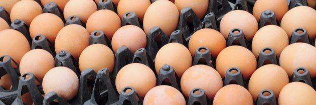 Œufs contaminés au fipronil: l'Afsca communique les codes des œufs à ne pas consommer et à ramener